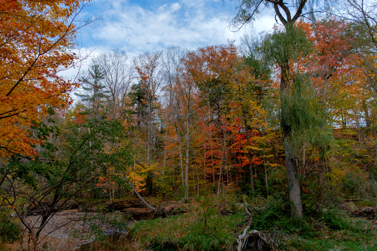 Fiery Fall Foliage 2016 at Edwards Gardens | JBIPix - A Personal ...