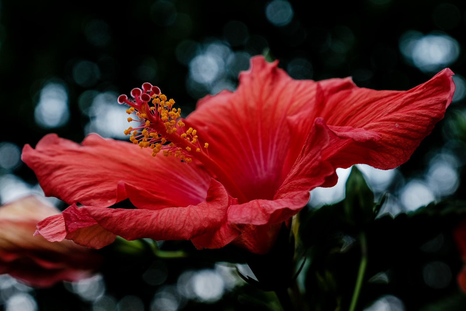flowers   JBIPix - A Personal Photoblog