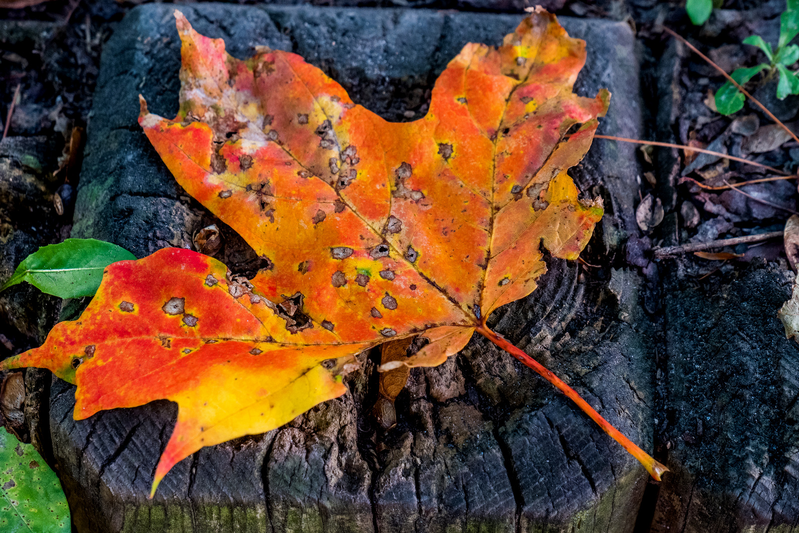 Mid September and Fall Colors 2017 | JBIPix - A Personal ...